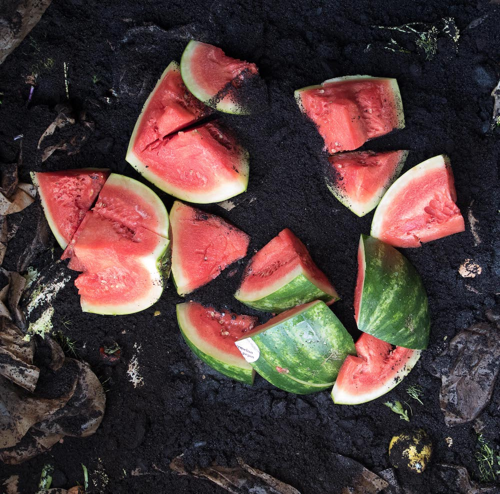 Wasted Watermelon, 2017